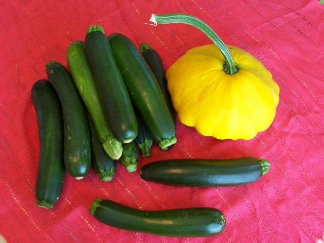 家常素食 12-1飛碟南瓜和夏季南瓜