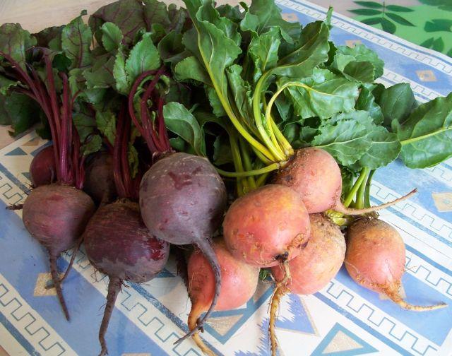 54-1紫紅甜菜與黃金甜菜