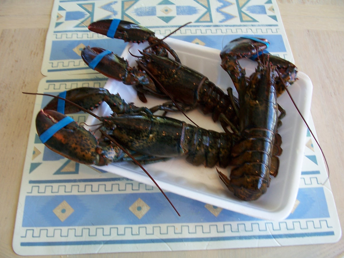 民俗節餐點 62-1活龍蝦