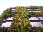 派崔克布朗-植物牆 24