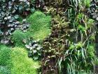 派崔克布朗-植物牆 26