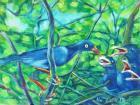 44臺灣藍鵲