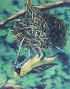 127紡織鳥