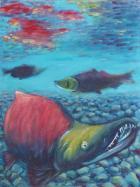 69 迴游產卵鮭魚